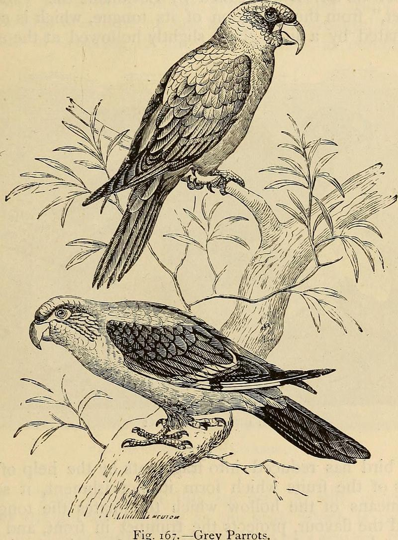 Reptiles and birds. A popular account of the various orders; with a description of the habits and economy of the most interesting. (1873) (14563008190).jpg