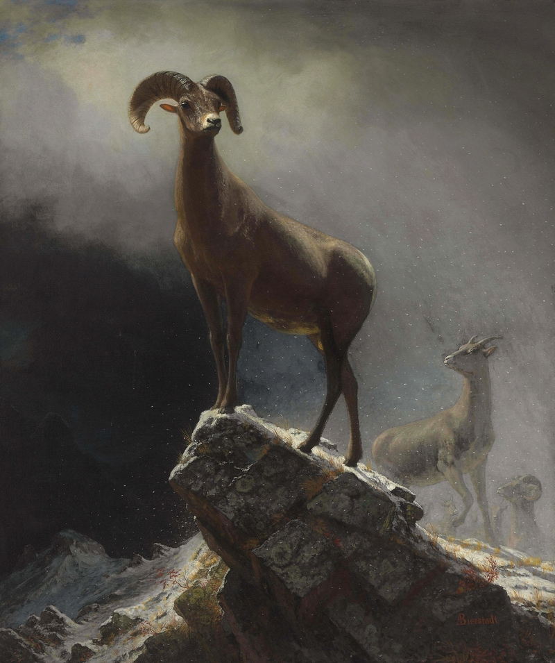 Albert Bierstadt - Rocky Mountain Sheep or Big Horn, Ovis, Montana.jpg